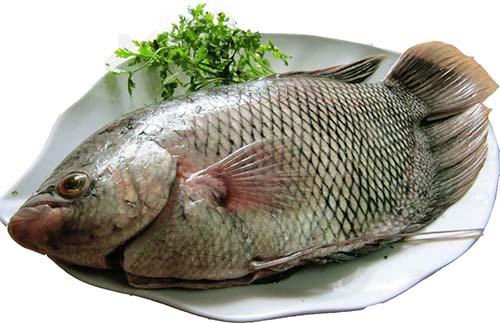 Nữ hộ sinh cảnh báo lạm dụng Cá sẽ khiến bé béo phì