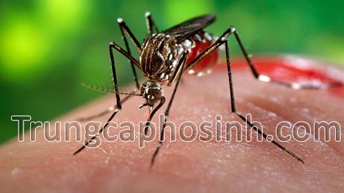 canh-bao-Virus-Zika